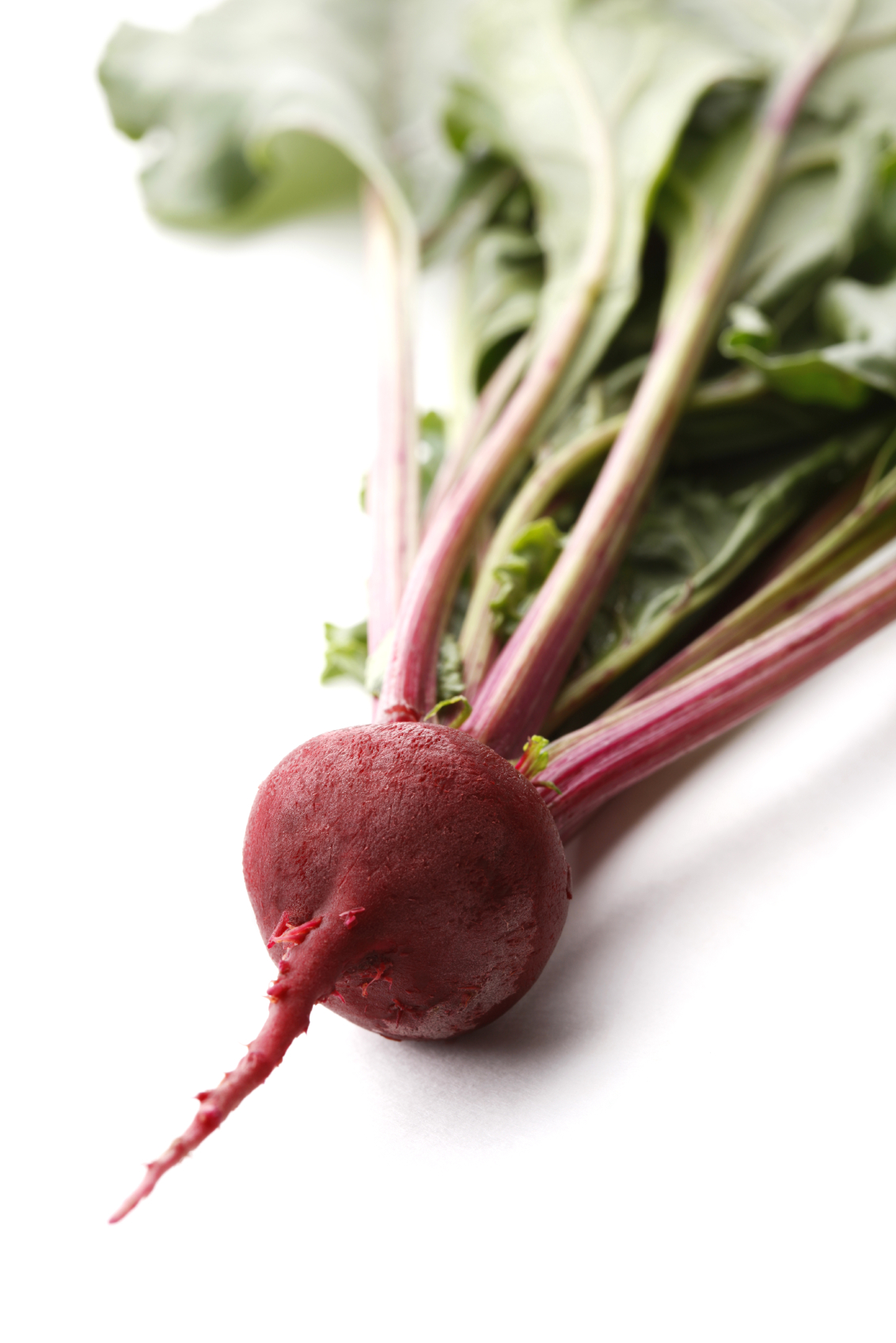 The gallery for --> Beetroot Drawing
