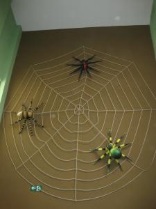 Spiders, Children's Museum, Costa Rica