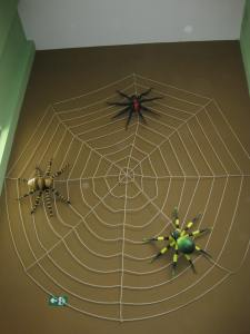 Spiders, Children's Museum, Costa Rica