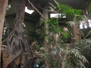 The Jungle, Children's Museum, Costa Rica