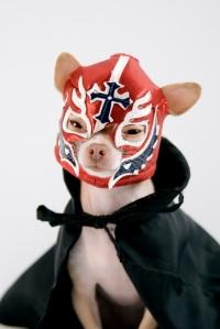 Dog in Costume - Homemade Costume Blog Parade - Alldonemonkey.com