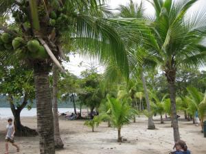 Beach Costa Rica - Alldonemonkey.com